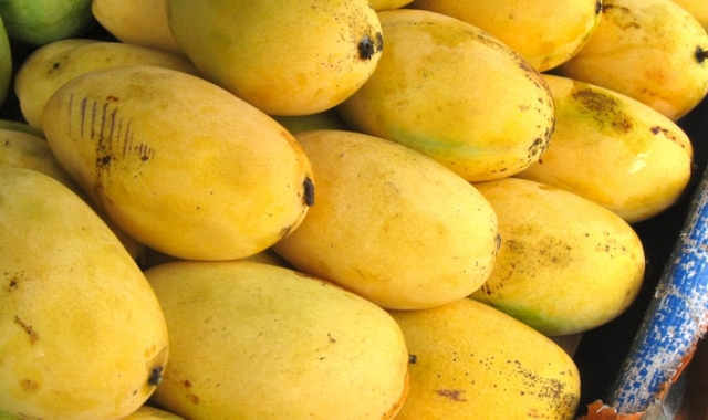 the best mangoes in the world