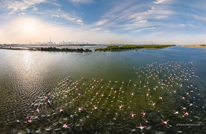 Flamingos in the Ras Al Khor Wildlife Sanctuary
