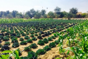 SPEND TIME OUTDOORS WITH THE FAMILY AT AN ORGANIC FARM IN DUBAI