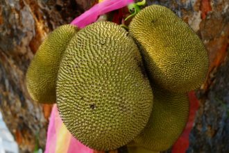 Jackfruit health benefits