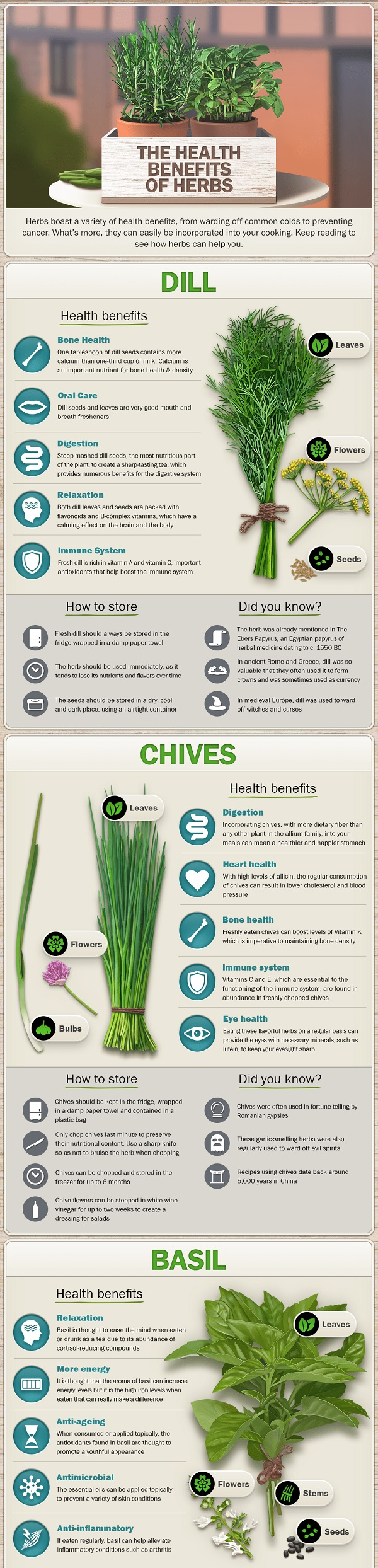 Infographic about the health benefits of herbs