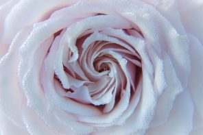 Rose Water benefits